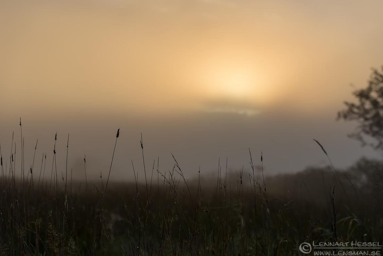 Morning dew fog