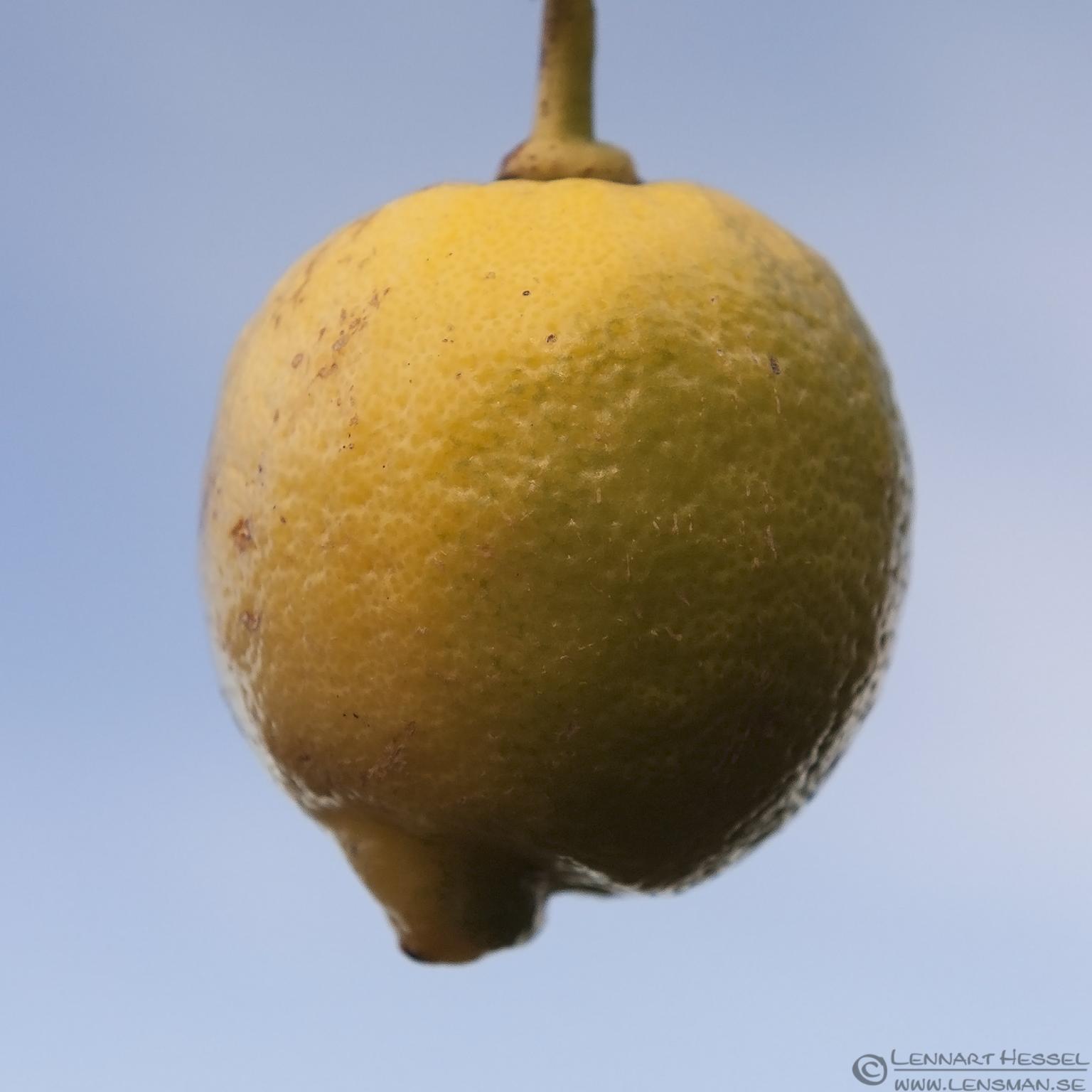 Lemon Australi