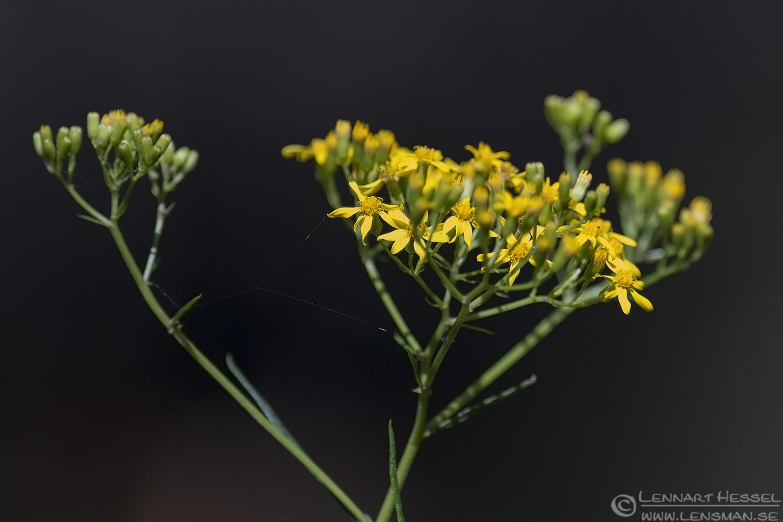 Yellow flowers christmas