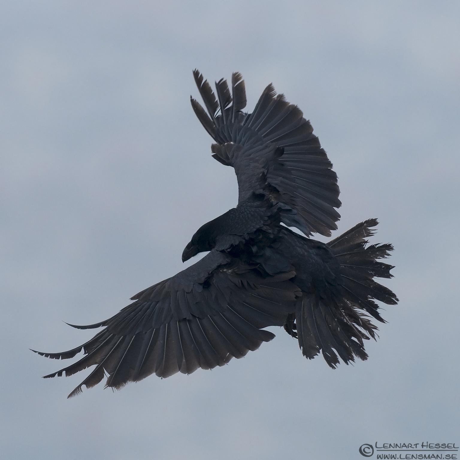 Raven landing Bulgaria