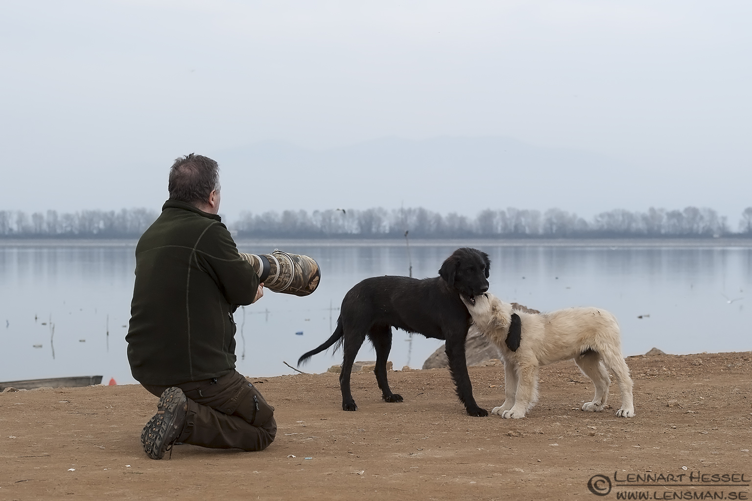 PLaying dogs Lake Kerkini