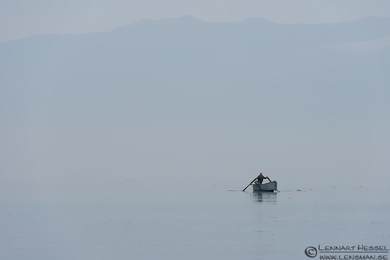 Lone Fisherman Dalmatian Pelican