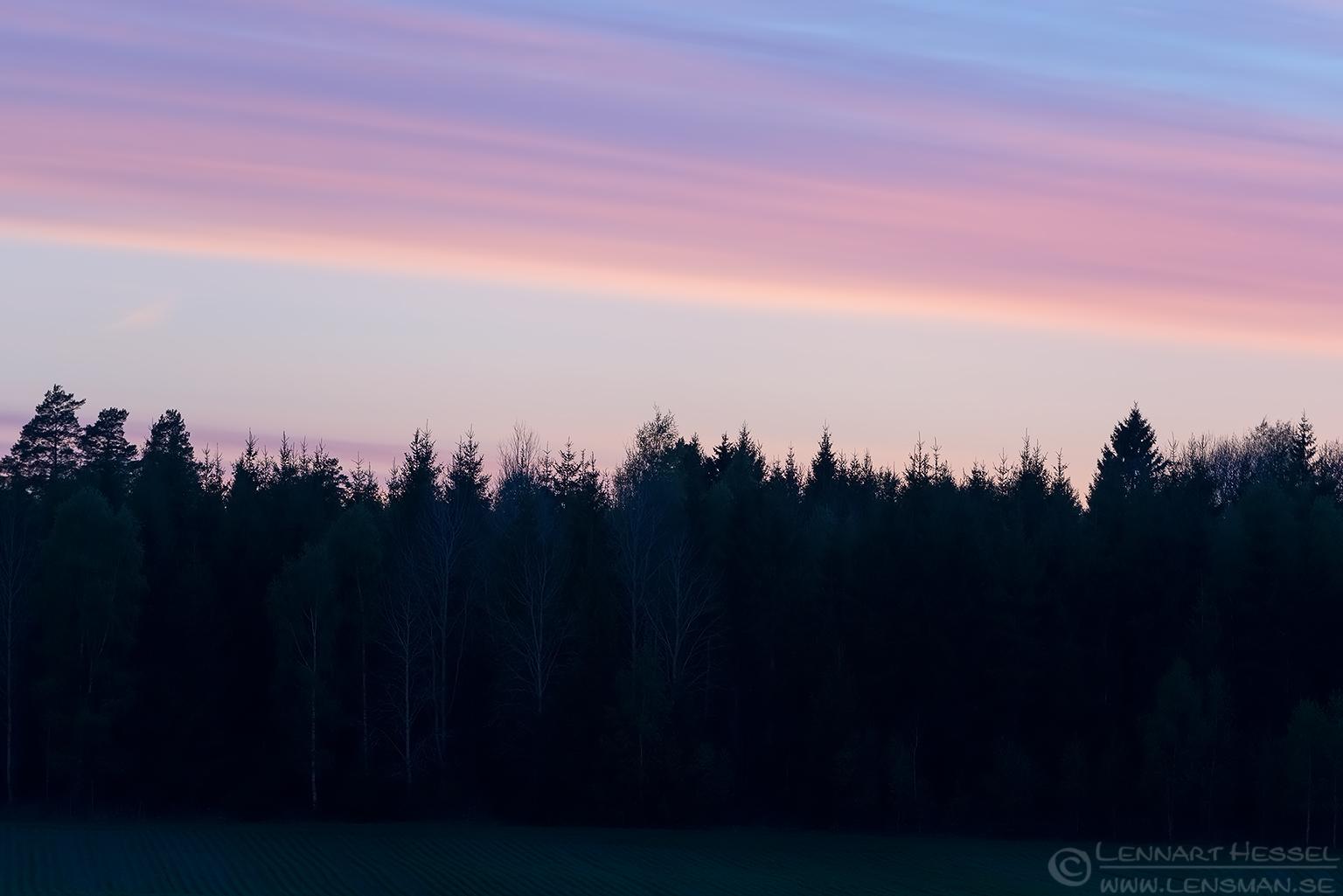 Sunset elk
