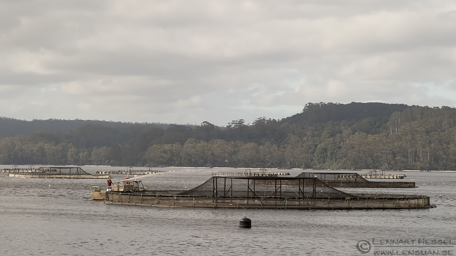 Fish Farming Strahan Tasmania