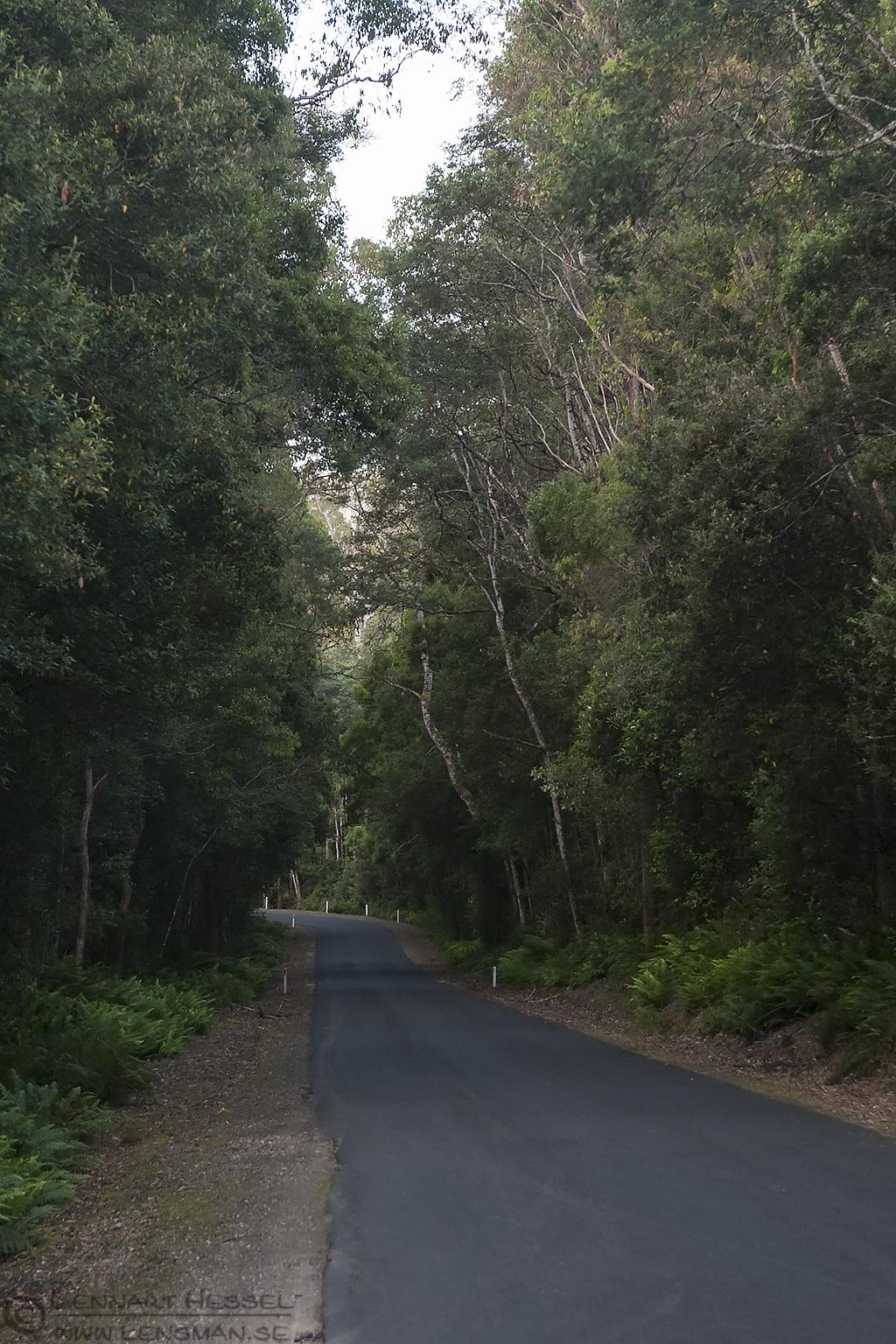 Tasmanian Road Tasmania