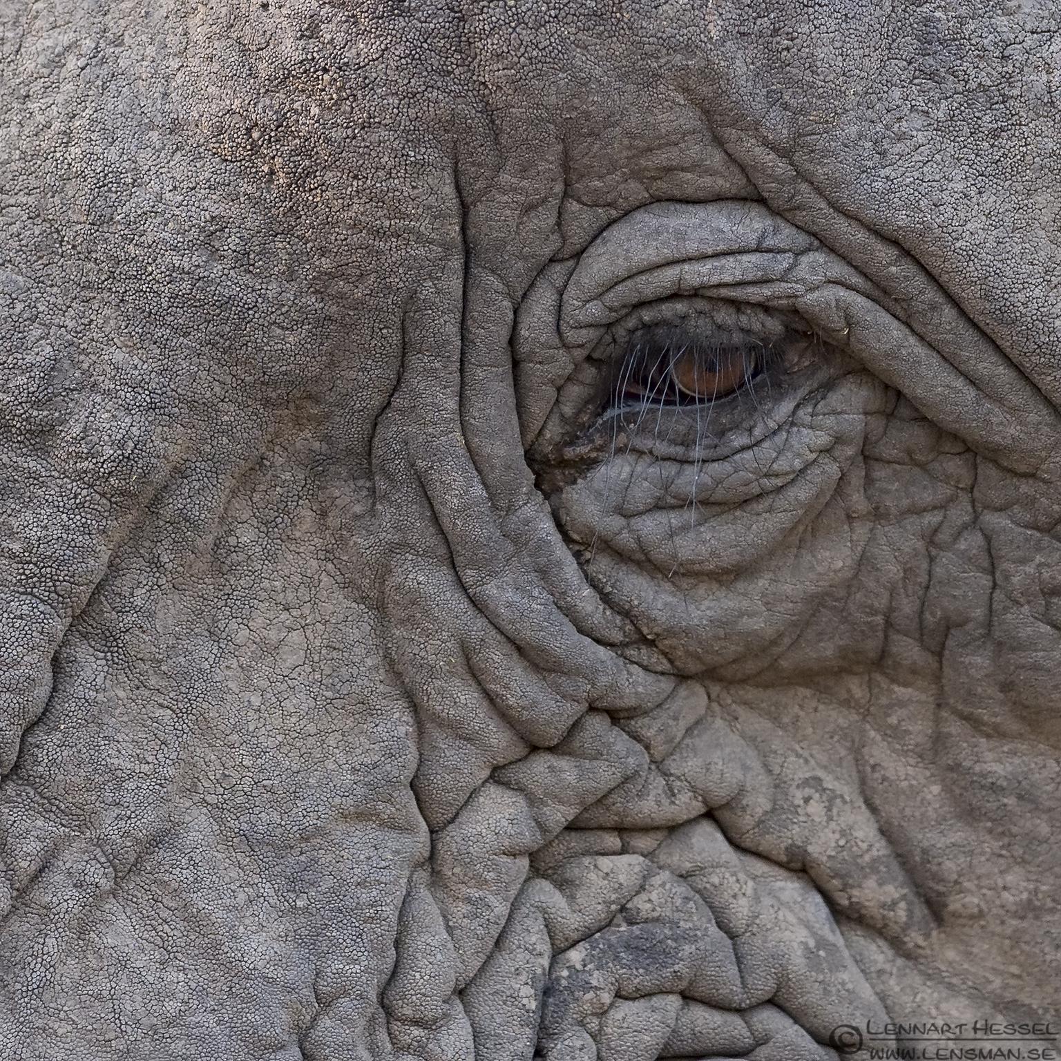 Eye of an Elephant Tshukudu Game Reserve South Africa