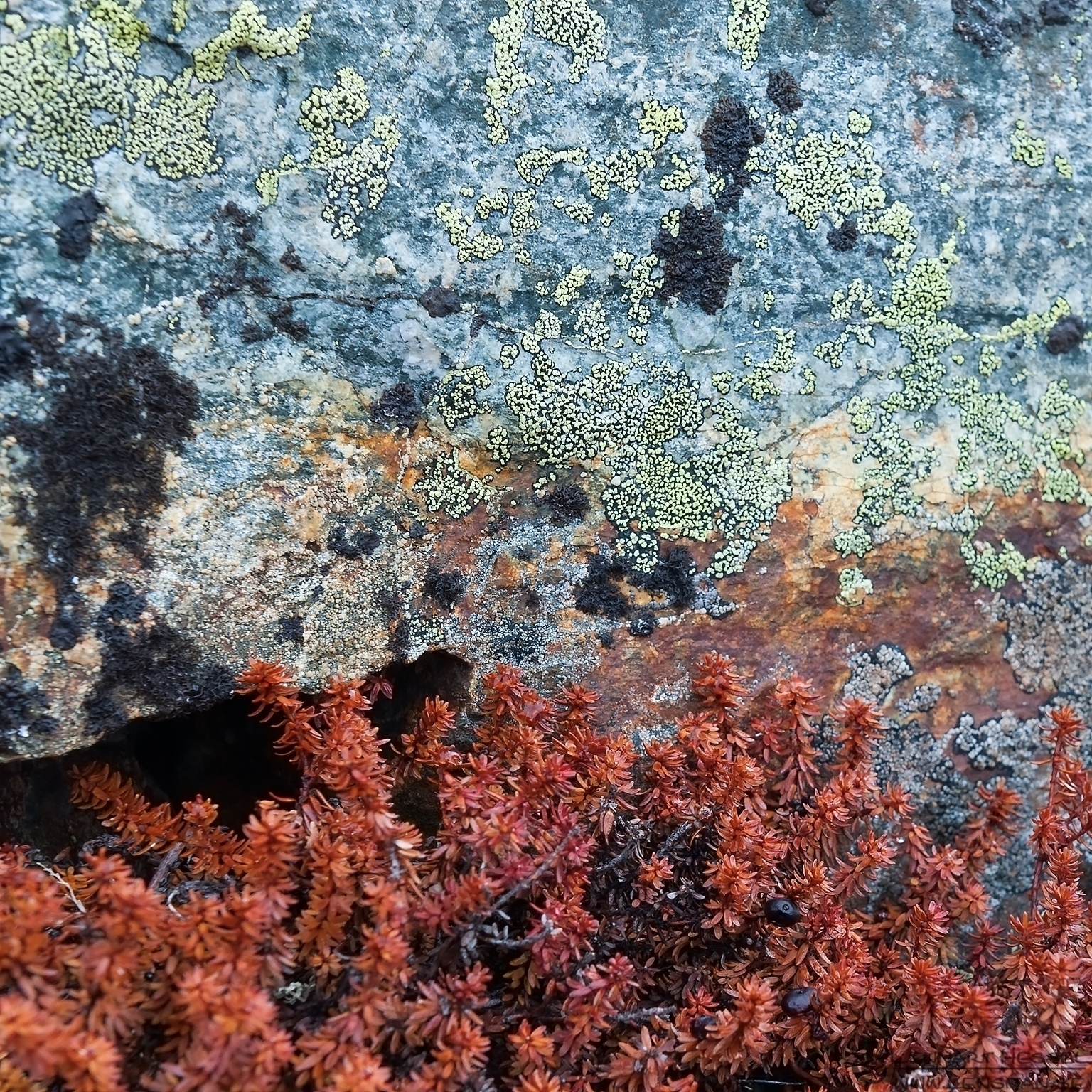 Colours Dovrefjell