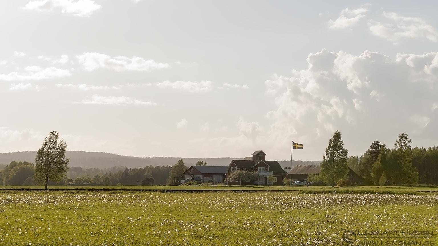 Swedish National Day Scandes