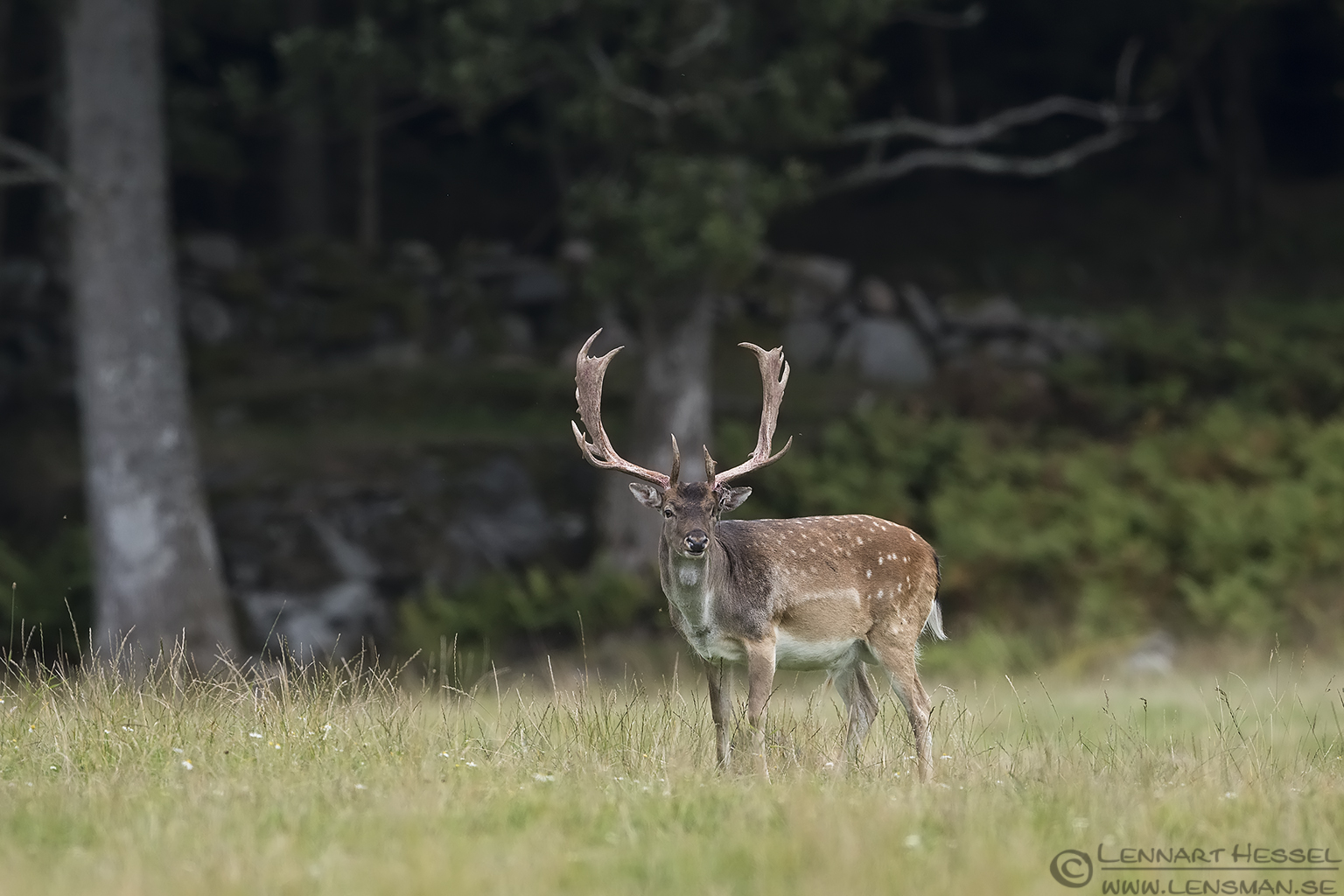 Red Deer calibrations and tests
