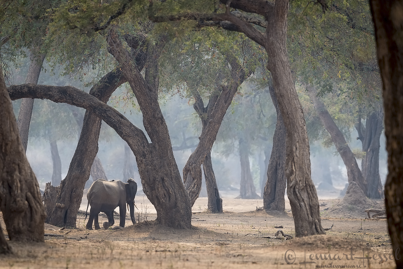 Mana Pools National Park 2015