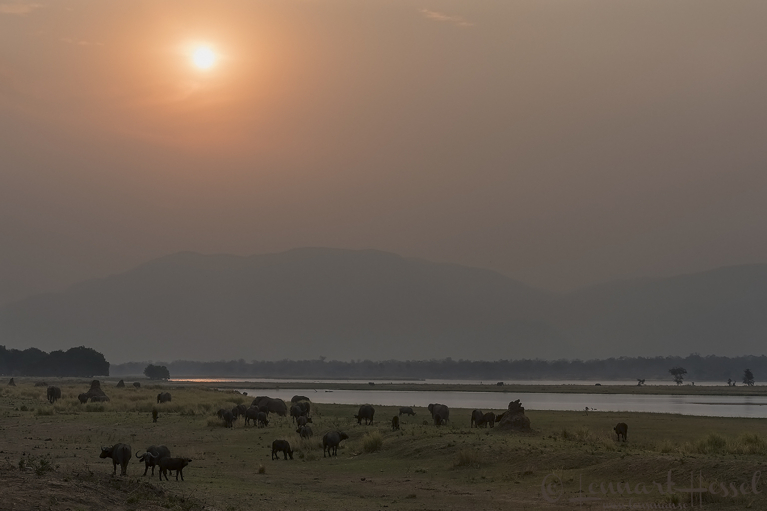 Zambezi Floodplan Mana Pools National Park