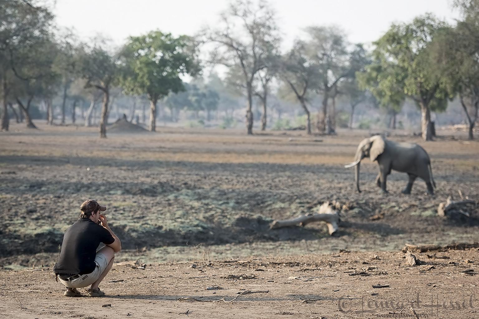 Zane and the Elephant Mana Pools National Park