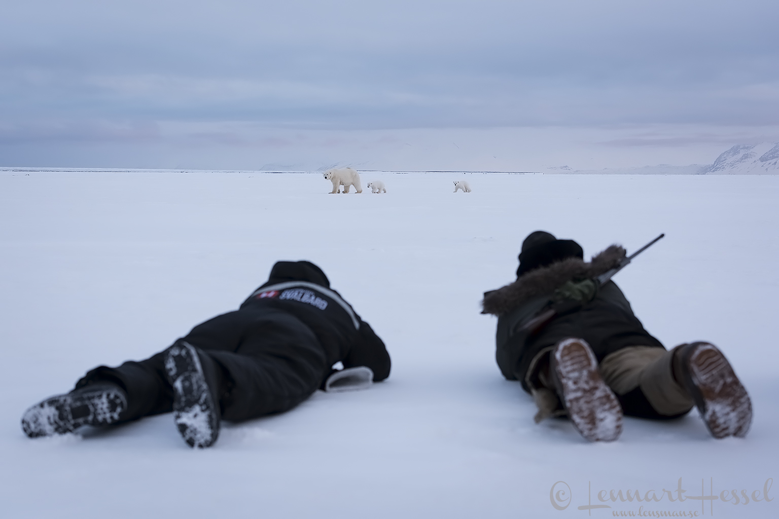 Polar bears Svalbard Arctic expedition photo