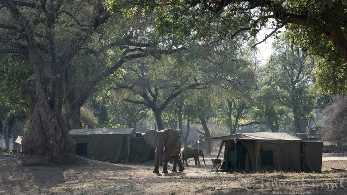 Camping with wildlife Mana Pools National Park