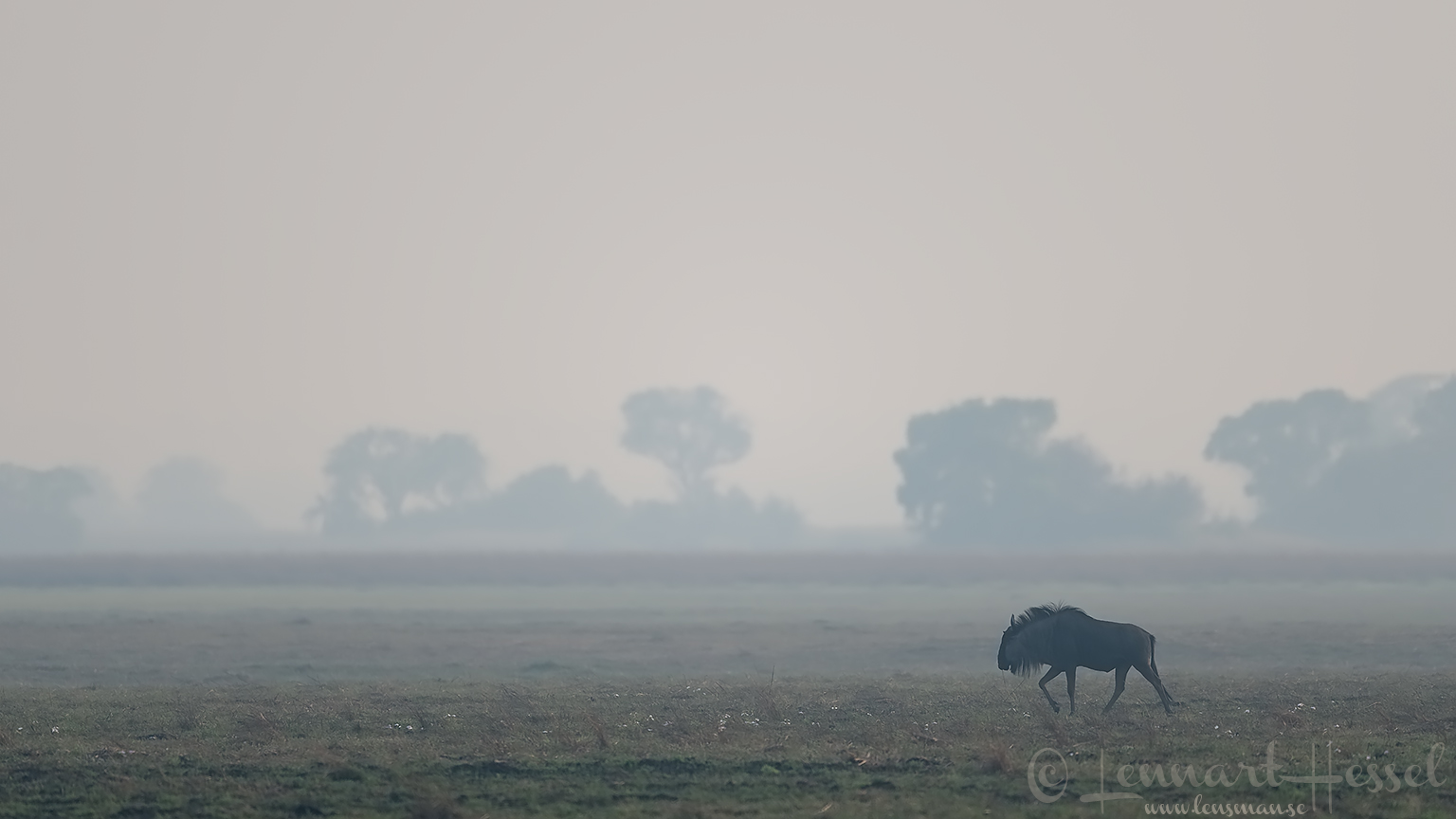 Blue Wildebeest Kafue National Park