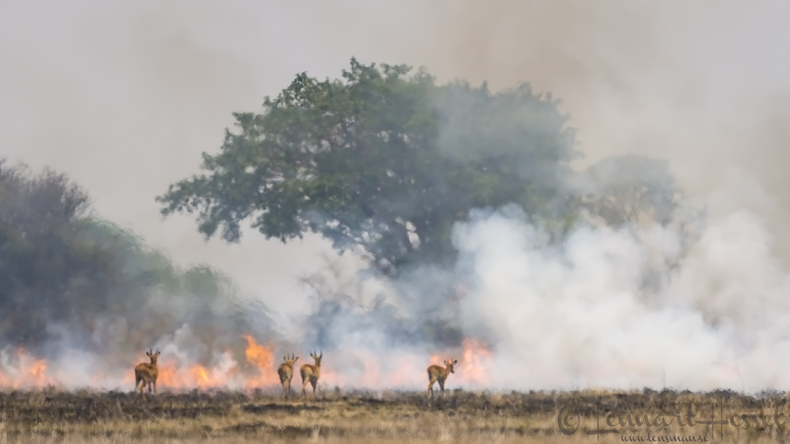 Bush fire Kafue National Park