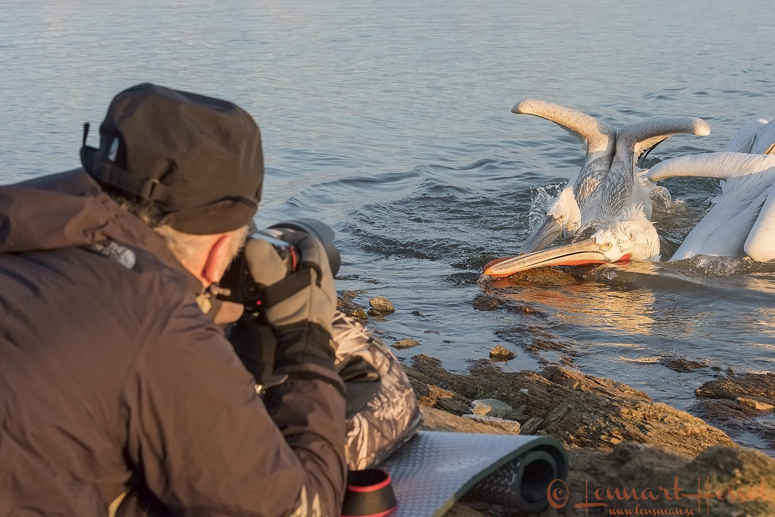Dalmatian Pelican Lake Kerkini workshop