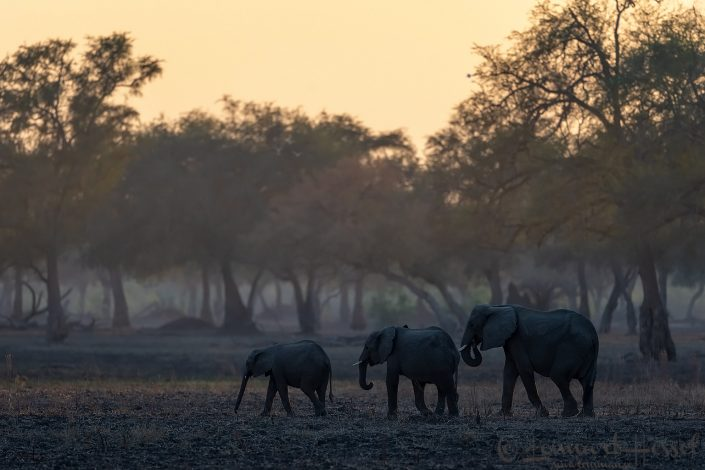 Elephant Mana Pools National Park