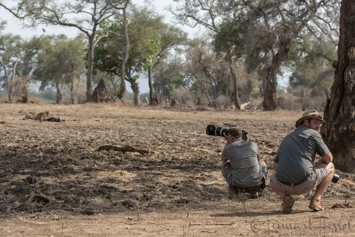Kevin Linforth and Jens Cullmann at the Lion kill Mana Pools National Park