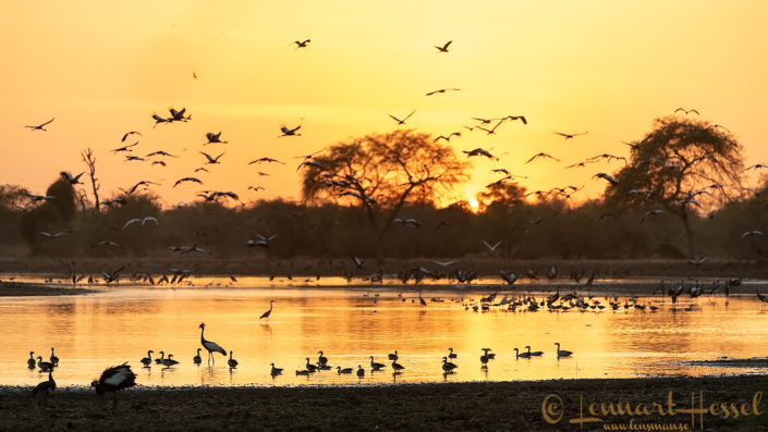 Birds at sunset Zakouma National Park Chad Salamat