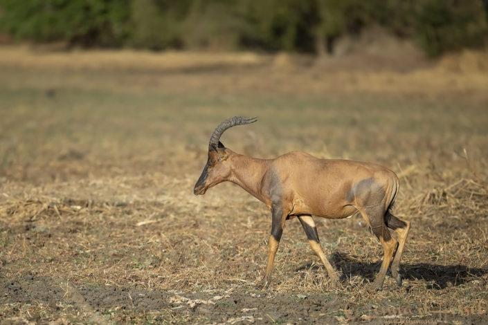 Tiang Zakouma National Park Chad Salamat