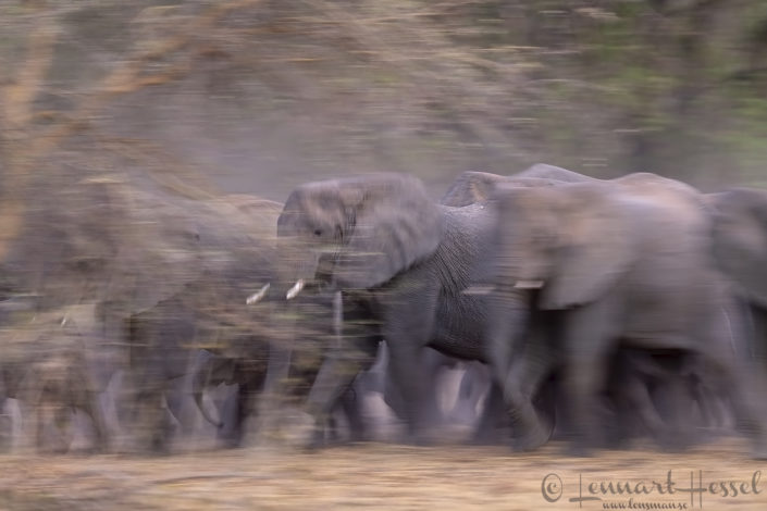 African Elephant protection Zakouma National Park Chad Salamat