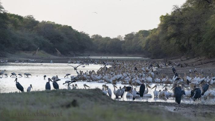 Salamat River teeming with life Zakouma National Park
