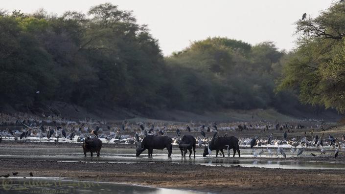 Salamat River river vista Zakouma National Park