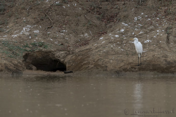 Crocodile hole and Egret Salamat River Zakouma National Park
