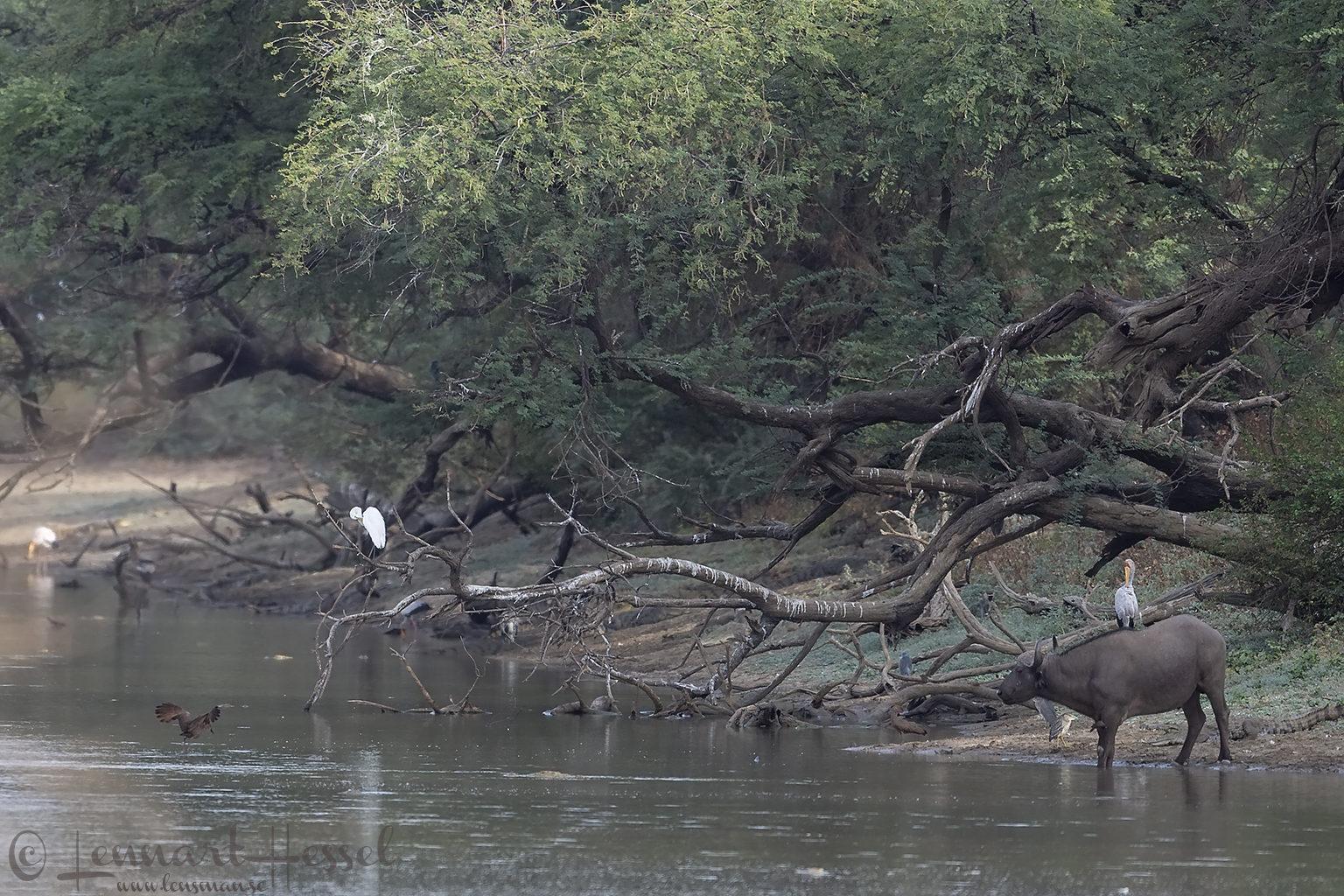 Salamat River scenery Zakouma National Park